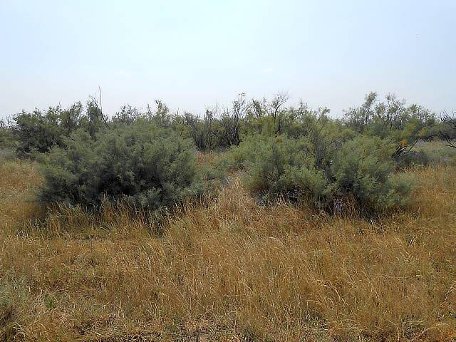 Растительность пастбищная, необходимости мероприятий по рекультивации нет