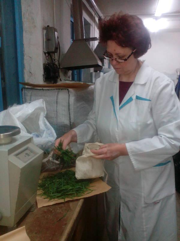 Приемка образцов листьев пшеницы. Ведущий агрохимик Ометова Т.Г.