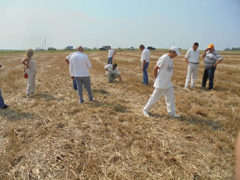 Участники семинара проводят оценку эффективности внесённого препарата Биовита-Агро по стерне озимой пшеницы