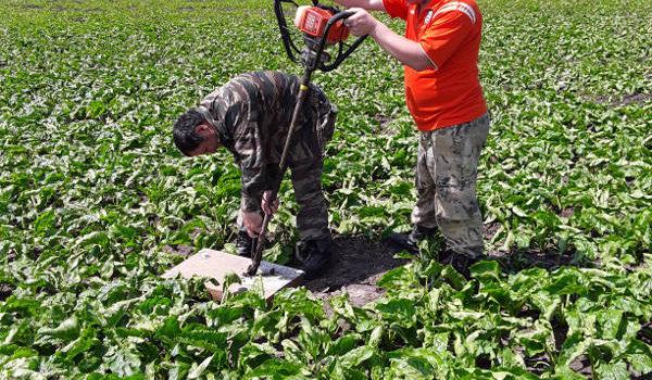 Главный агрохимик Давыдов В.Е. и агрохимик II-ой категории Фильчев М.И. проводят отбор почвенных образцов на посевах свёклы