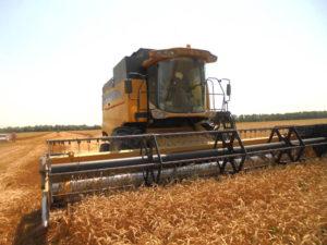 Уборка зерновых. Красногвардейский район