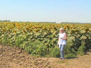 Главный районный агрохимик Красногвардейского района Сорокина С.А. на опытном поле подсолнечника