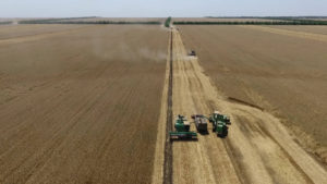 Комбайны собранное зерно пересыпают в грузовик