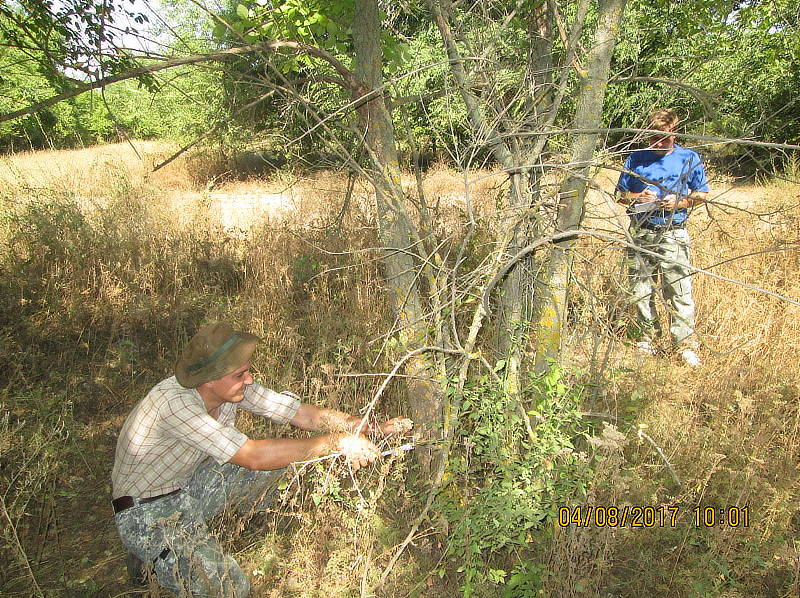 Учет древесно-кустарниковой растительности