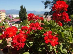Цветы на балконах домов