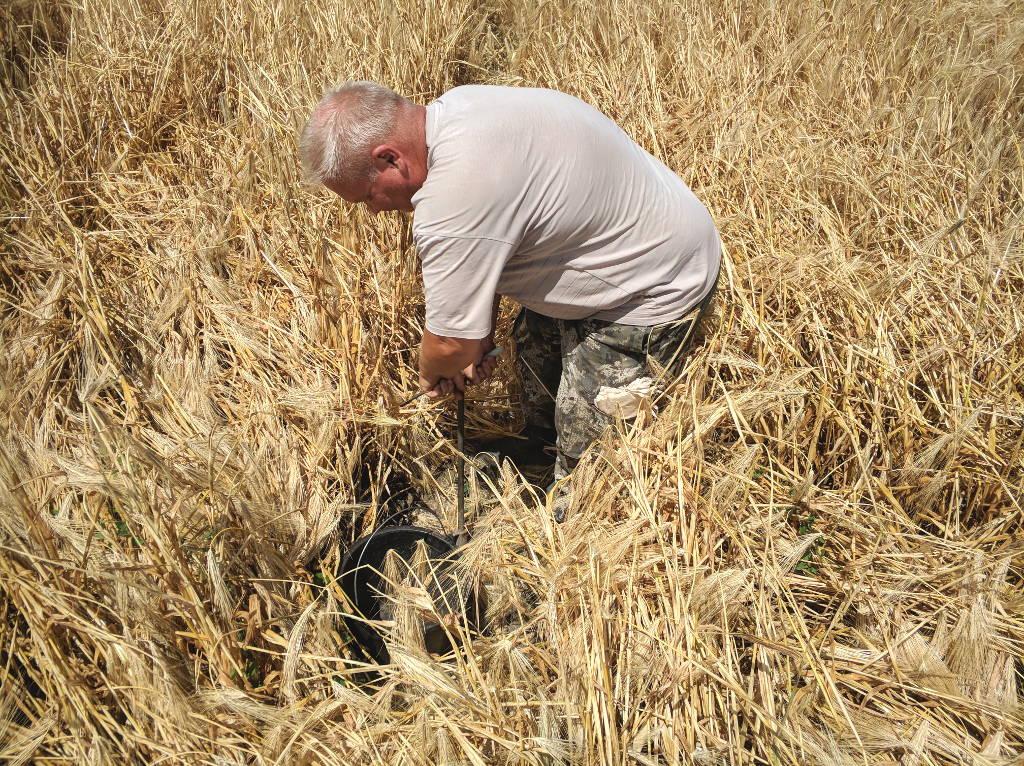 Отбор почвенных образцов проводит главный почвовед Макоед А.А.
