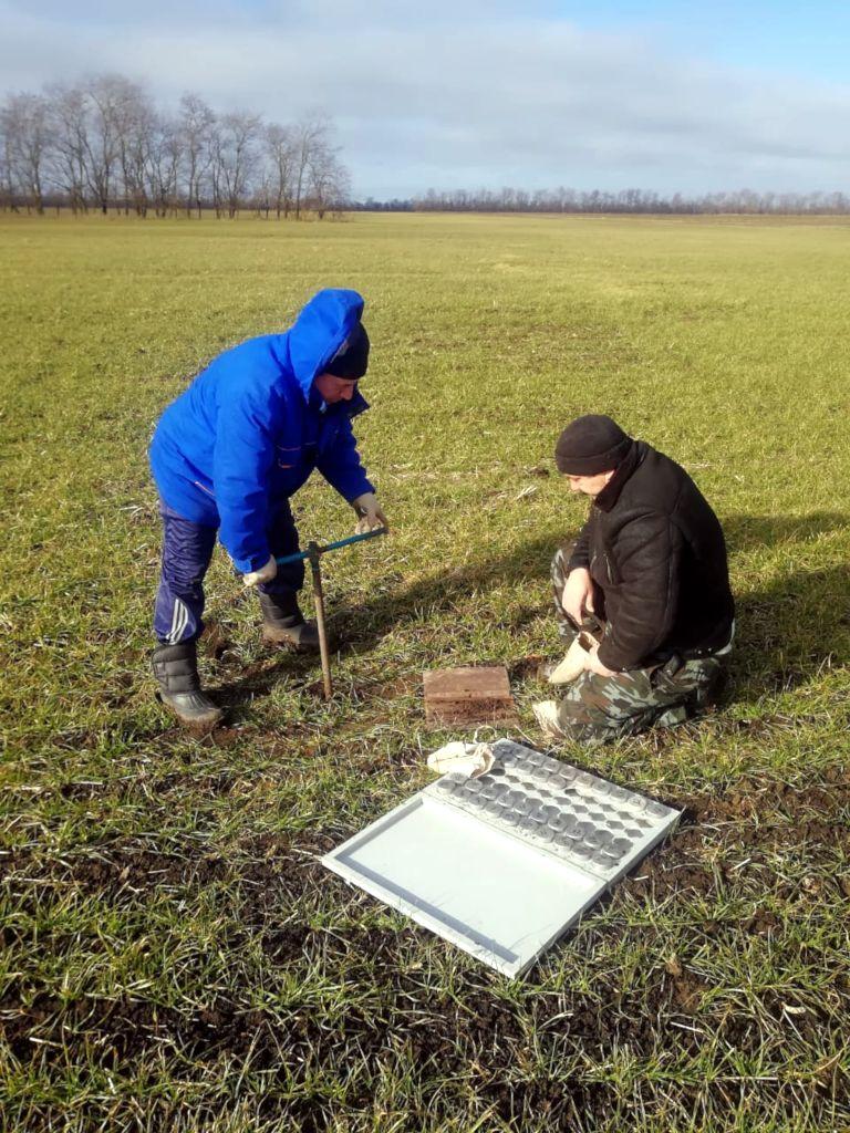 Агрохимик II категории сектора ПУ и О Фильчев М.И. совместно с сотрудником СПК колхоз «Родина» Труновского района проводят отбор почвенных образцов на посевах озимой пшеницы