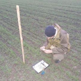 Фенологические наблюдения на мелкоделяночных полевых опытах в 4-х зонах Ставропольского края