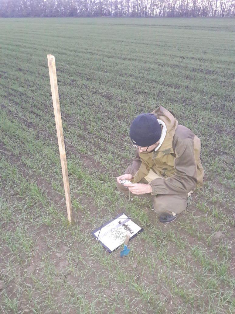 Отбор образцов растений с опытных делянок в СПК «Дубовский» Шпаковского района