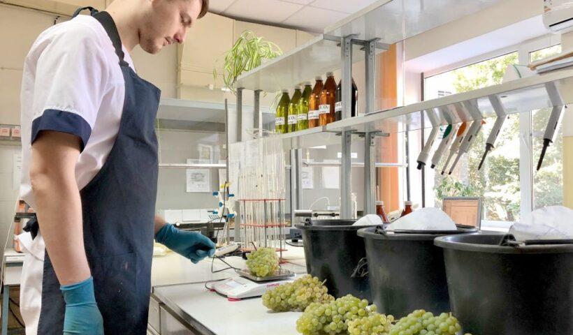 Определение средней массы грозди