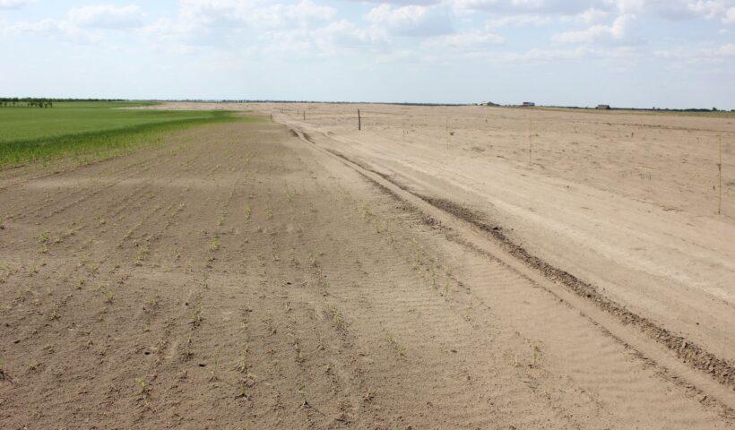 Опустынивание в восточных районах Ставропольского края