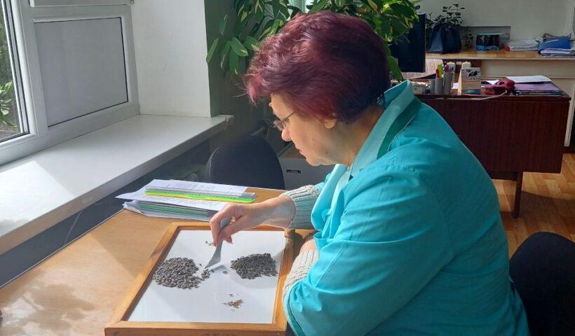 Определение сорной и масличной примеси в пробах подсолнечника. Ведущий агрохимик испытательного центра (лаборатории) ‑ Ометова Т.Г.